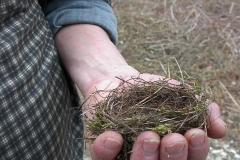 Il nido del moscardino