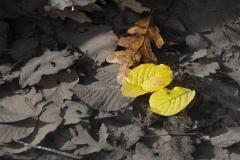 foglie-nellacqua