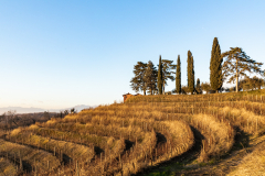 vigne-e-cipressi